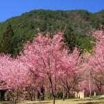 4 武陵農場